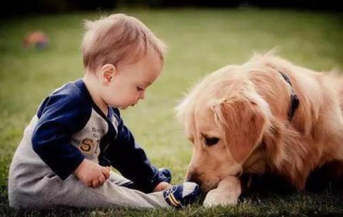 """【""""狗和孩子,你选一个!""""""""狗!""""】 孩子和现任选一个"""