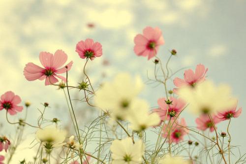 我是那些花儿【我所喜欢的那些花儿】